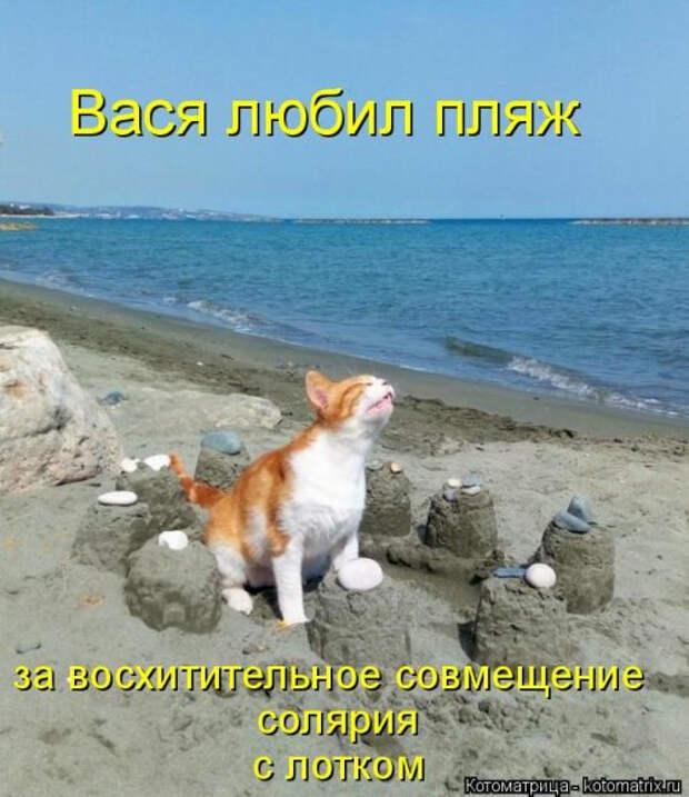 1556890773_kotomatricy-12 (500x579, 205Kb)