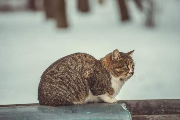 На теплотрассе Хвостатые, братья наши меньшие, город, кот, кошка, улица, уличные кошки, эстетика