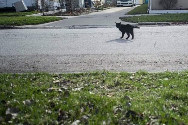 Утром Нэйтан собирался отвезти отца на работу, как вдруг… в мире, домашний питомец, животные, история, кот, похороны, чудо