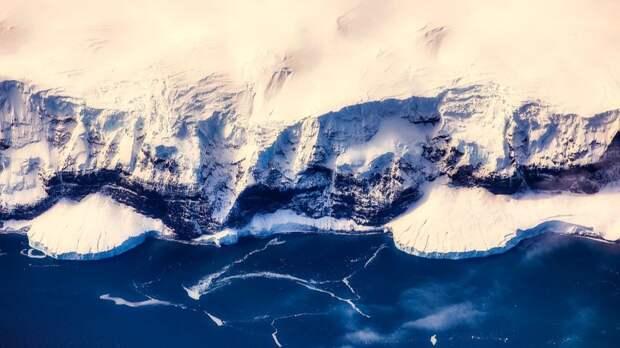 В Антарктиде обнаружены существа, которые спасут людей от многих смертельных заболеваний