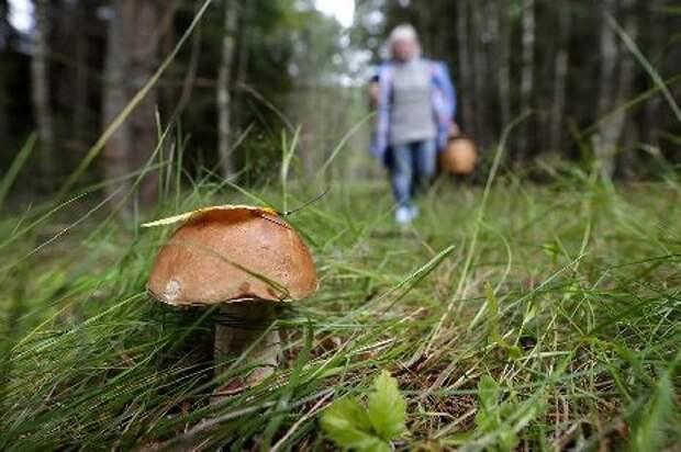 В Минприроды опровергли информацию об ужесточении правил сбора грибов и ягод