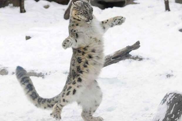 Симпатичные и забавные котики живность, картинки, позитив