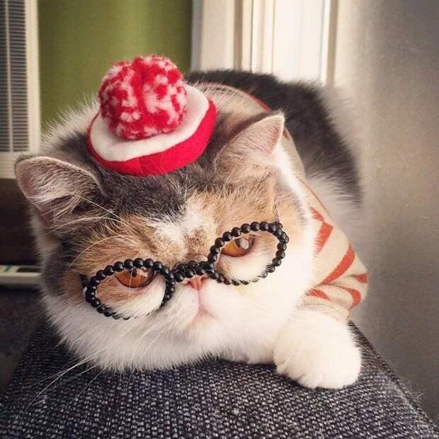Буона, кошки инстаграм, Buona, популярные кошки