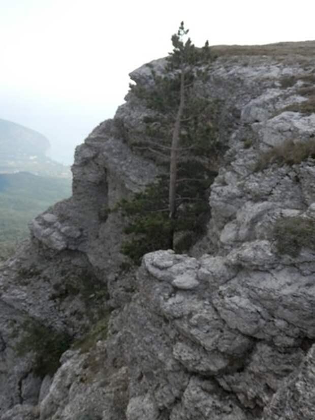Ялта — по местам царской охоты