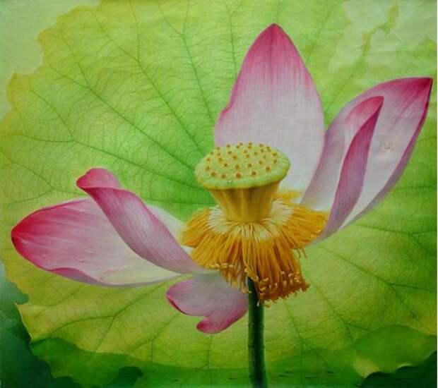 Jiang Debin. Цветы маслом. Beauty of Lotus. 99х109