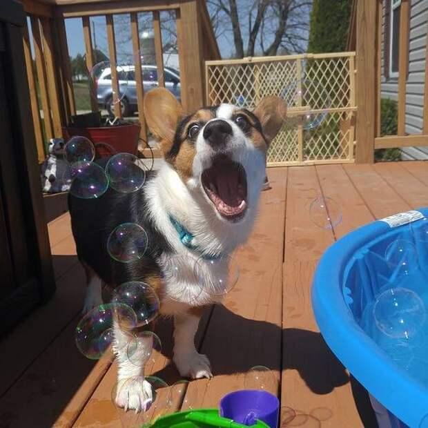 Прикольные фотографии и смешные картинки для улыбки (11 фото)