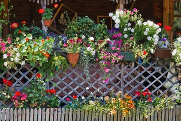 Цветы в контейнерах украсят любой забор