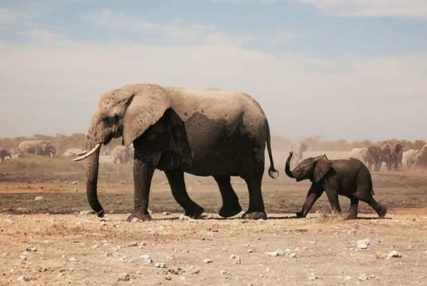 Культурный центр «Митино» расскажет дошкольникам  о диких зверях и их детях