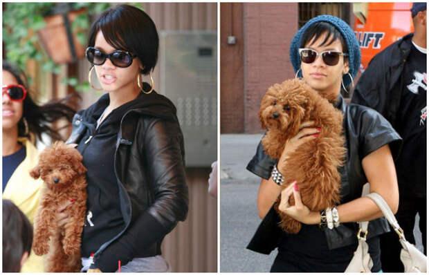 Свою небольшую собачку Рианна любит носить на руках