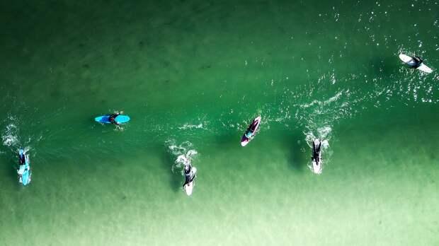 На Fish Food Festival будет работать школа серфинга