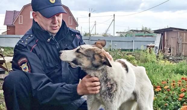 ВОмской области замученная собака «родилась заново»