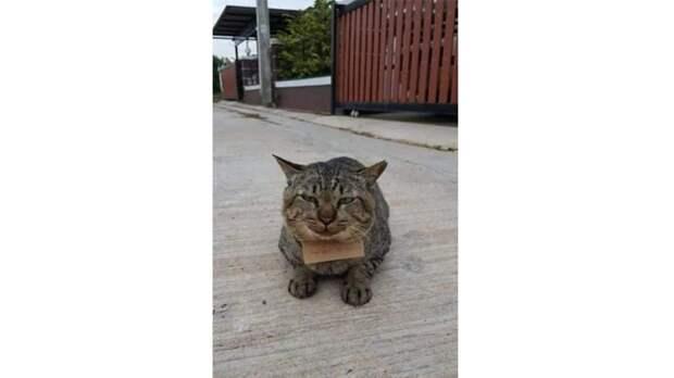 Кот вернулся домой спустя три дня пропажи – и «обанкротил» хозяина
