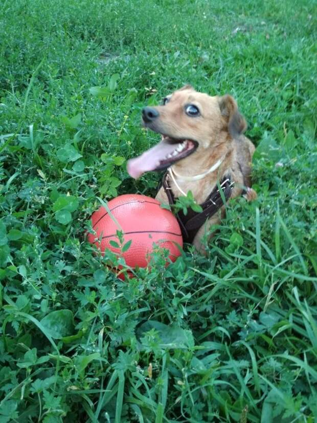 Выброшенный на улицу, потерявший лапу, истощенный пес все-таки нашел любящих хозяев