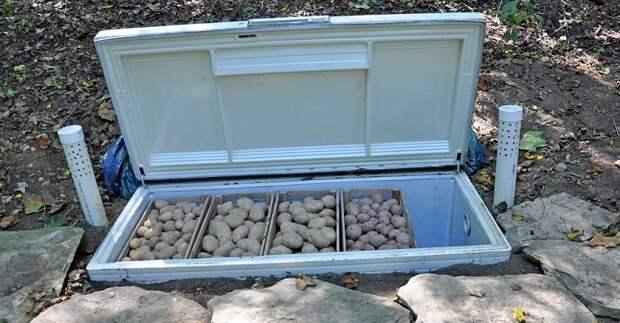 погреб для картофеля
