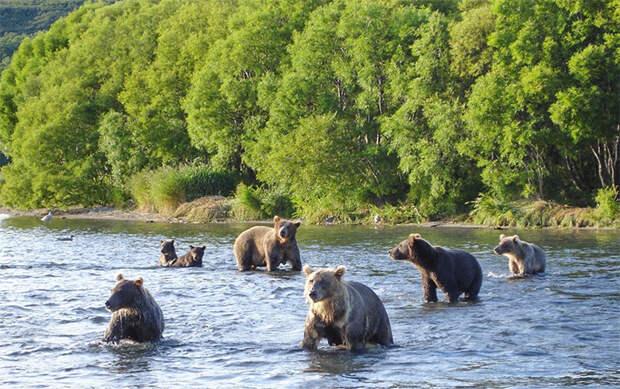 "Картинки по запросу ""Камчатке рыбалка и медведи"""