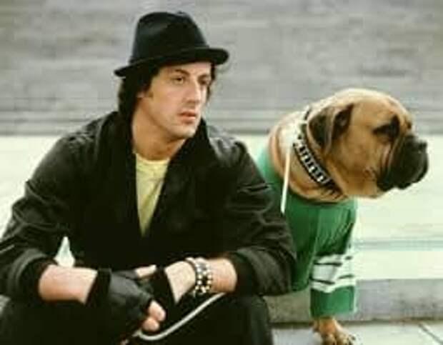 О том, как Сильвестр Сталлоне, в 1971 году продал за $40 свою собаку, а затем выкупил ее обратно за $15 000