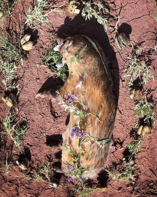 Необыкновенно красивые ипечальные фото цветочных мемориалов для мертвых животных