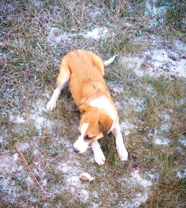 Щенок мерз на снегу, но все проходили мимо