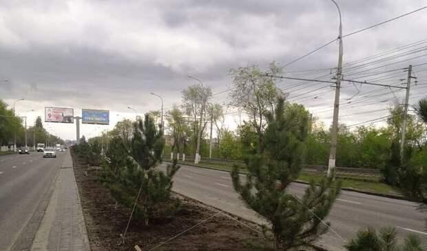 В Волгограде началось озеленение разделительной полосы на проспекте Ленина