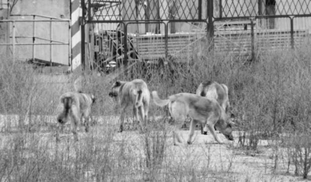 25 тысяч получит подросток отадминистрации Североуральска заукусы бездомных собак