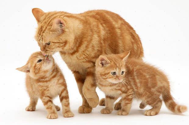 Поведение кошачьей мамы спустя время поразило хозяина своей осмысленностью