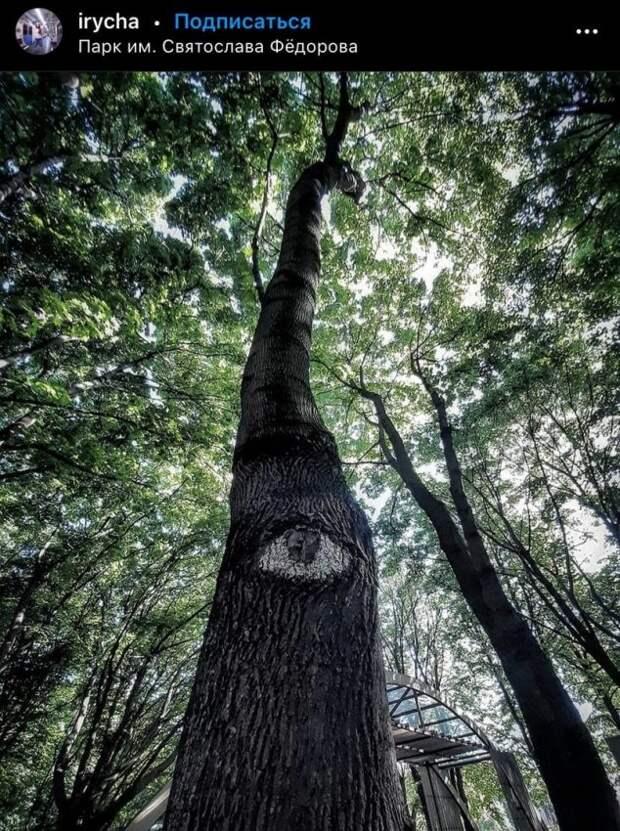 Фото дня: глазастое дерево в парке имени Федорова