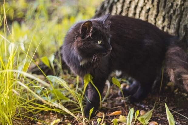 Котиков много не бывает! Хвостатые, братья наши меньшие, город, кот, кошка, улица, уличные кошки, эстетика