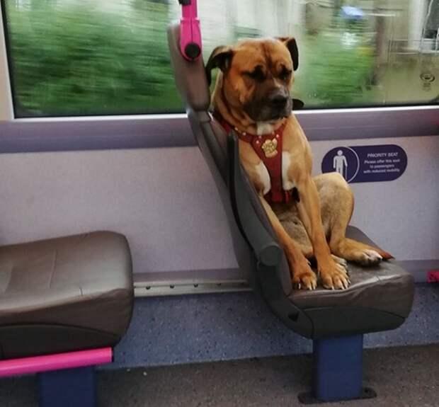 Фото одинокого пса в автобусе растрогало жителей...