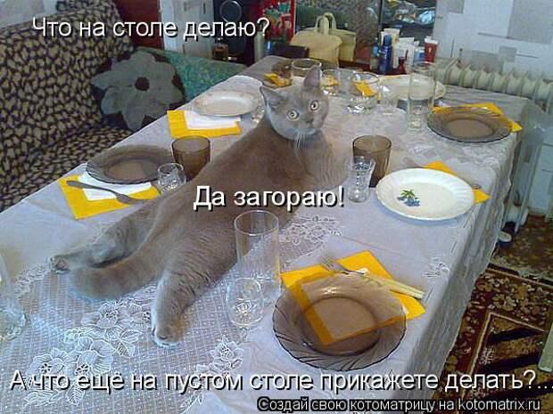 Котоматрица: Что на столе делаю? А что ещё на пустом столе прикажете делать?... Да загораю!