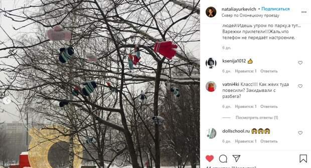 Фото дня: украшенное варежками дерево появилось в сквере по Олонецкому проезду
