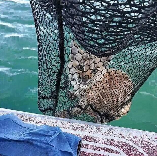 Такой улов бывает только один раз в жизни (3 фото)
