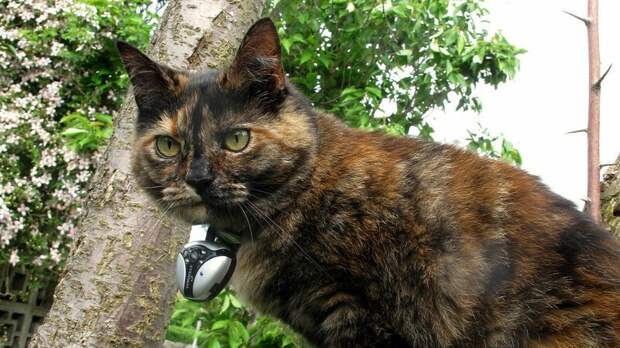 Британские учёные, установив камеры на кошках, выявили двуличность домашних питомцев видео, животные, камера, кот, ученые, эксперимент