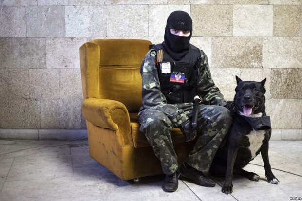 Братья меньшие по оружию армия, животные. война