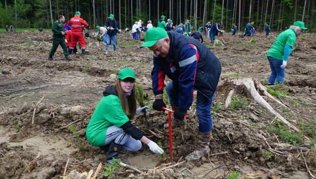 Воробьев поблагодарил всех участников акции «Лес Победы»