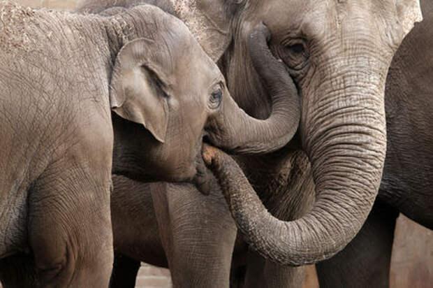 Неправильно запарковался? — слоны тебя научат!