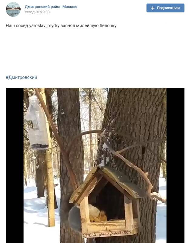 Фото дня: в парке «Вагоноремонт» засняли бельчонка