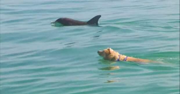 Трогательная дружба: лабрадор каждый день бежит на пристань, чтобы поплавать со своими другом дельфином