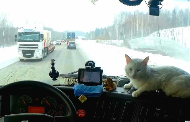 """Кот - дальнобойщик на """"торпеде"""". Фото с сайта news.ati.su, обработка автора"""