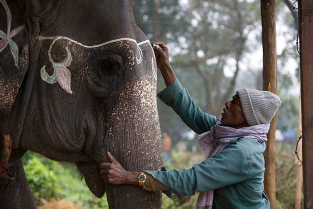 Десятилетие фестиваля слонов в Читване