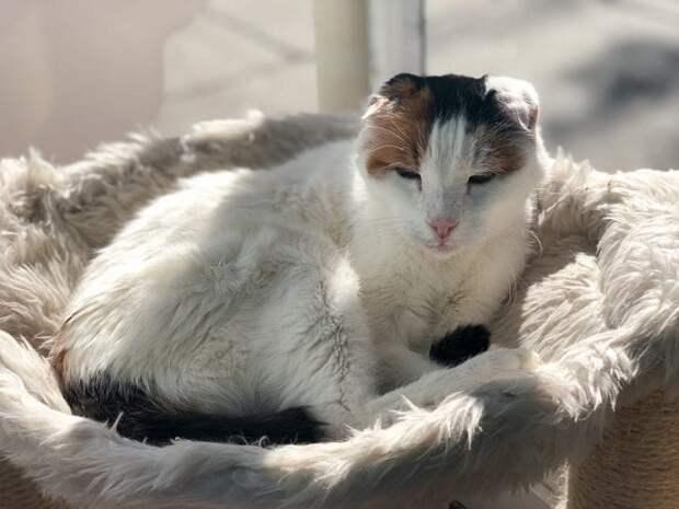 Старенькая кошка всю жизнь прожила на улице, где оглохла, но случайная встреча все изменила