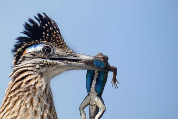 10 лучших фотографий птиц сконкурса Audubon Photography Awards 2020