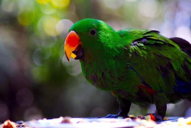 Говорящий попугай в Австралии не дал хозяину погибнуть в огне