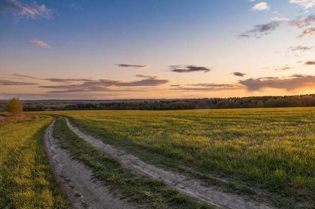 Площадь посевных земель Подмосковья увеличится на 46 тысяч гектаров в 2021 году