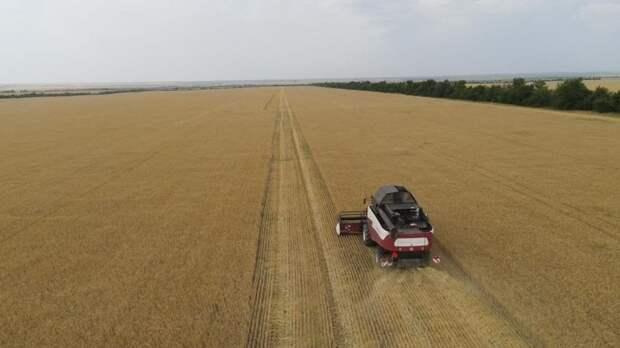 Андрей Рюмшин: В Республике Крым стартовала уборочная кампания озимых зерновых культур – 2021