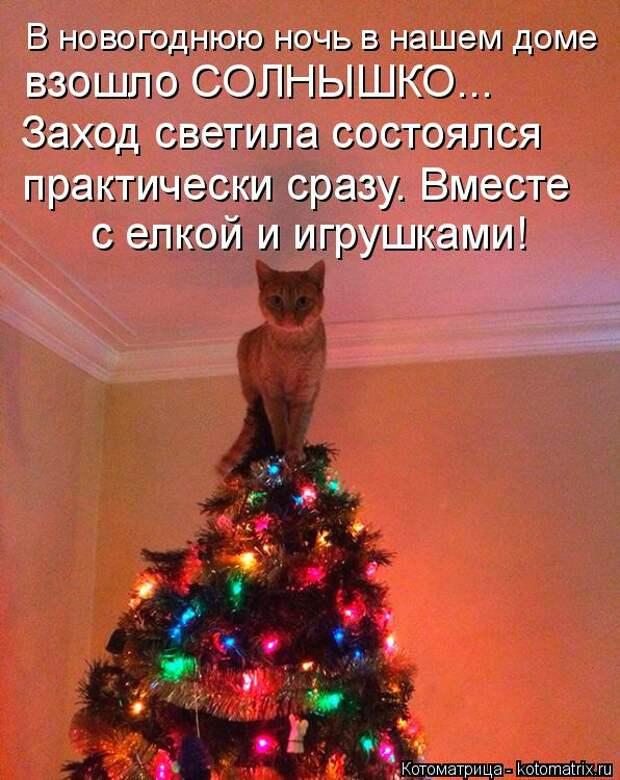 Котоматрица: В новогоднюю ночь в нашем доме взошло СОЛНЫШКО... Заход светила состоялся  практически сразу. Вместе  с елкой и игрушками!