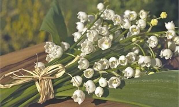 Май в Кировской области ожидается дождливым
