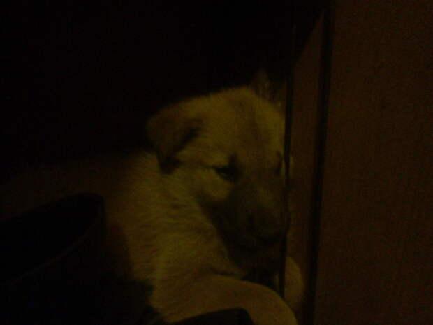 Вот таким он первый раз оказался у нас в коридоре.. #находка, #собака, #спасение
