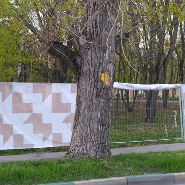 В сквере на улице Берзарина вырубать деревья не будут