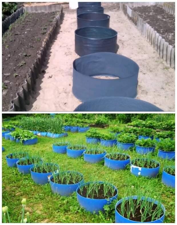 Старые бочки можно использовать для создания мини-огорода.