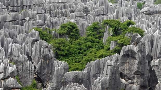 Учёные из США объяснили механизм формирования «каменного» леса